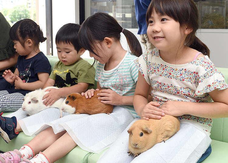【上野動物園ガイド】大人気動物園の見どころ&グルメ・お土産・便利情報を紹介!