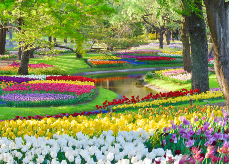 1. Snap photos and enjoy the scenery at parks and flower gardens