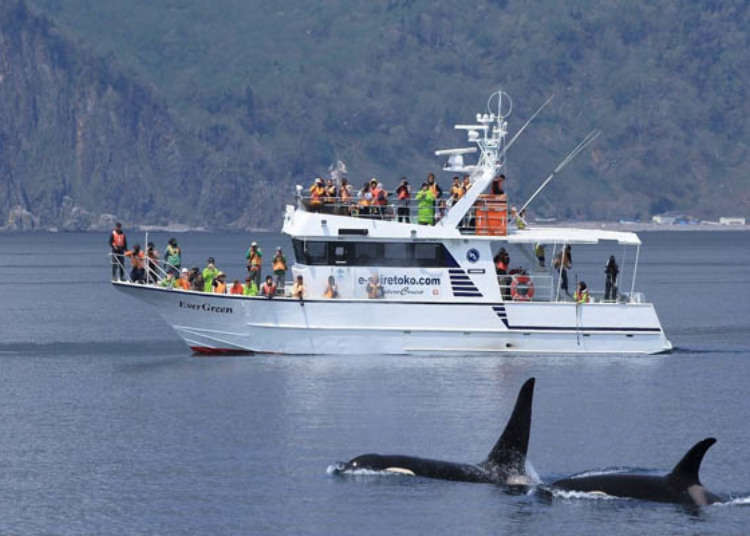 Go on a whale and dolphin watching tour at the world heritage site of Shiretoko!
