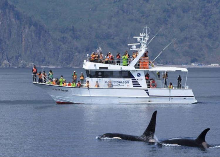 홋카이도 시레토코 여행시 고래와 돌고래를 만날 수 있는 크루즈 관광!