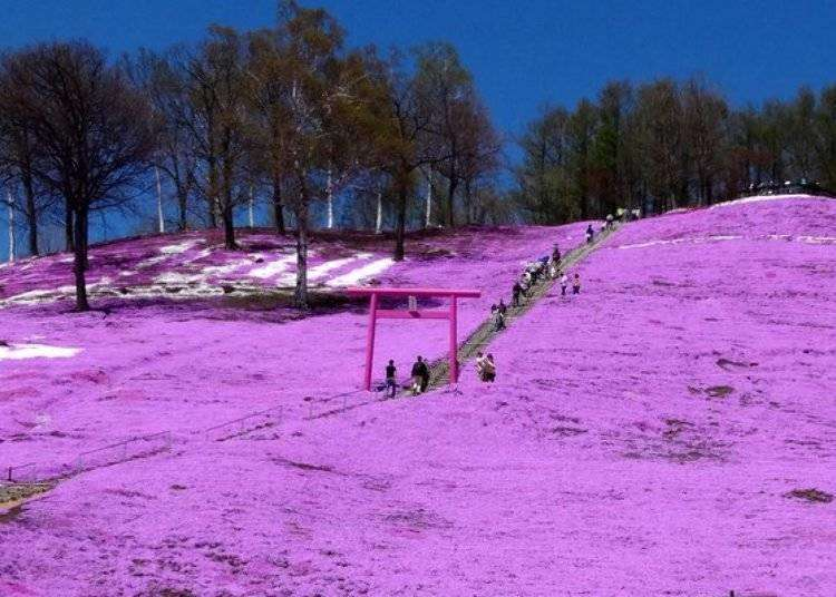 Hokkaido Spring 2019: When is the best time to visit the famous Higashimokoto Shibazakura Park?