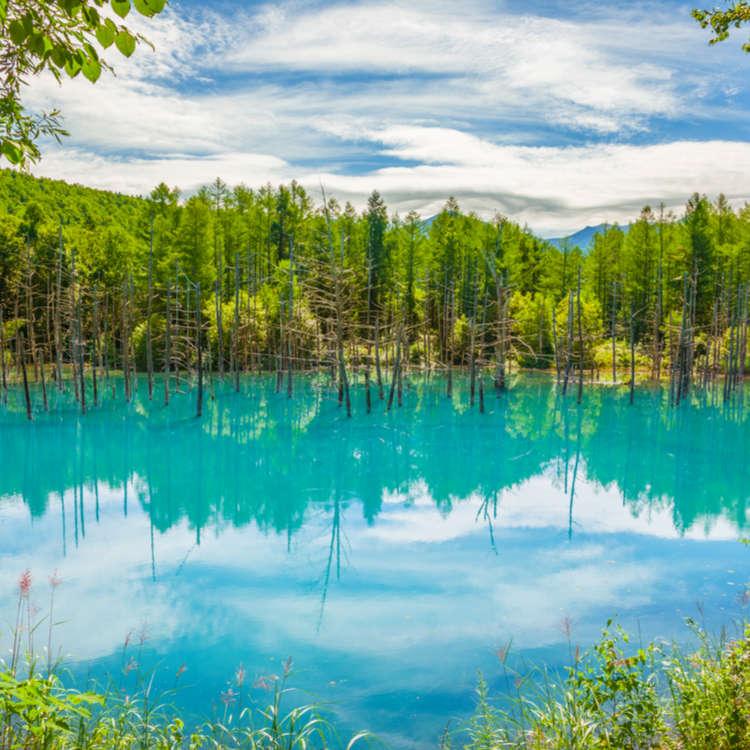 北海道富良野‧美瑛 不可错过的5处绝美景点