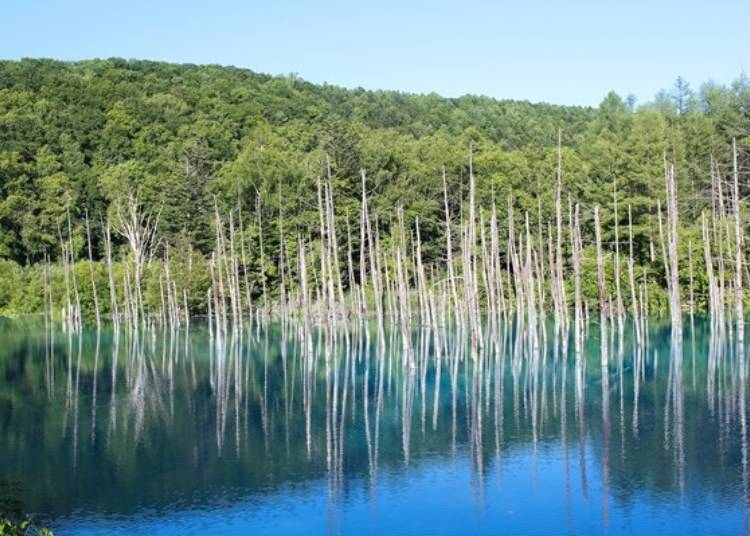 A Postcard-Perfect Picture: The Majestic Blue Pond