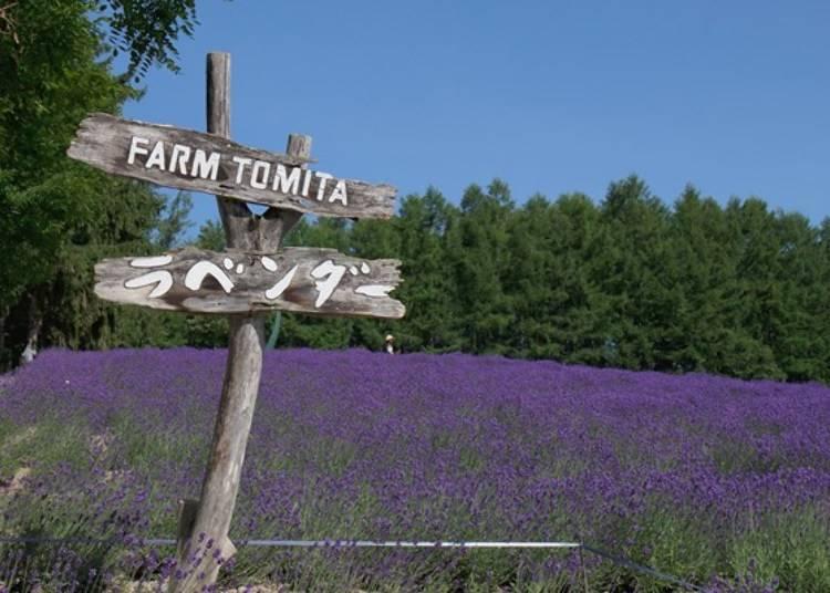 以薰衣草田聞名的「富田農場」
