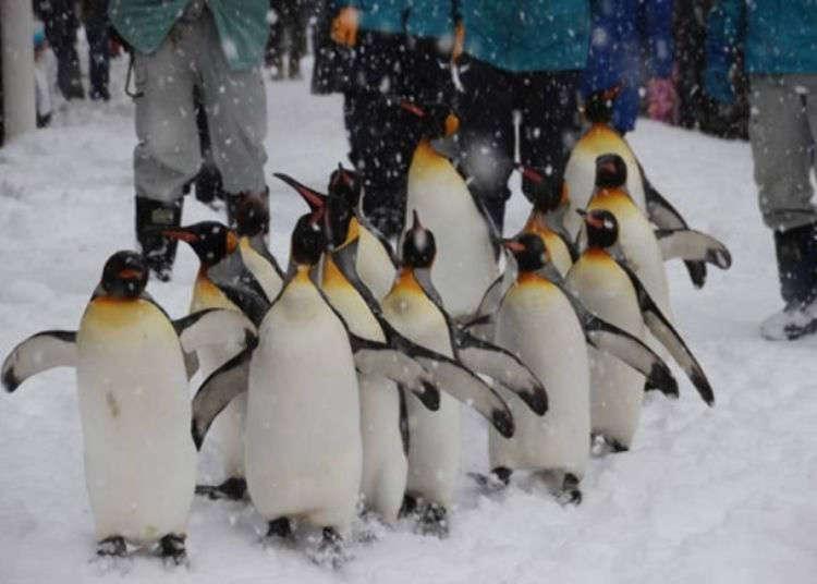 把握喂食秀时间准没错!到北海道旭山动物园与动物们会面吧♪