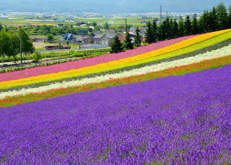 A gorgeous floral wonderland – just a hop away from Sapporo! Day trip to Furano/Biei