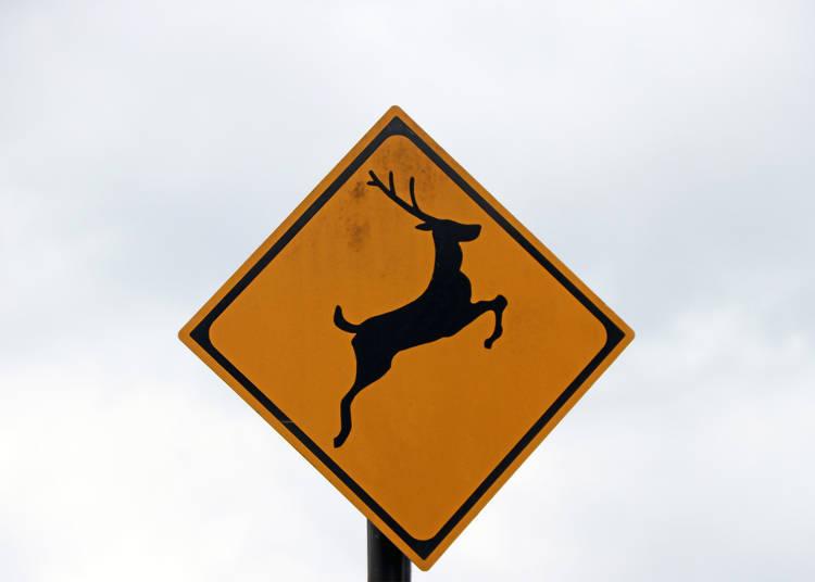 Tip 3: Animal crossings and speeding!