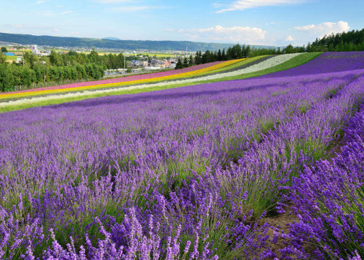 Sights, Eats, Shopping! Quick introduction to Furano and Biei