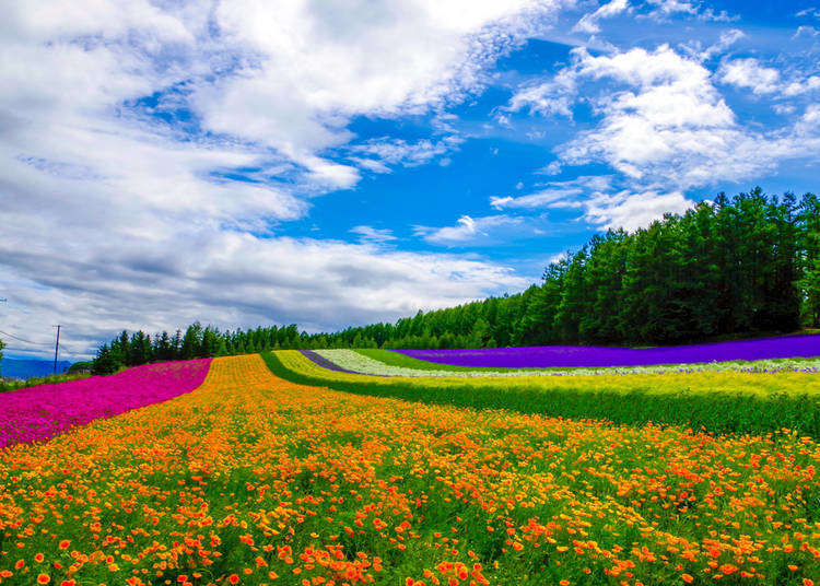 Hokkaido sightseeing information! Key things you need to know the climate in Hokkaido