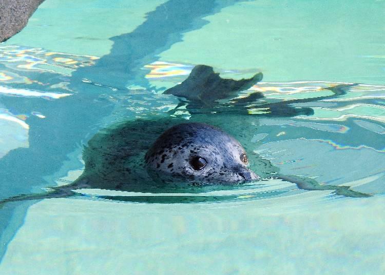 See wild animals up close!  Sapporo City Maruyama Zoo