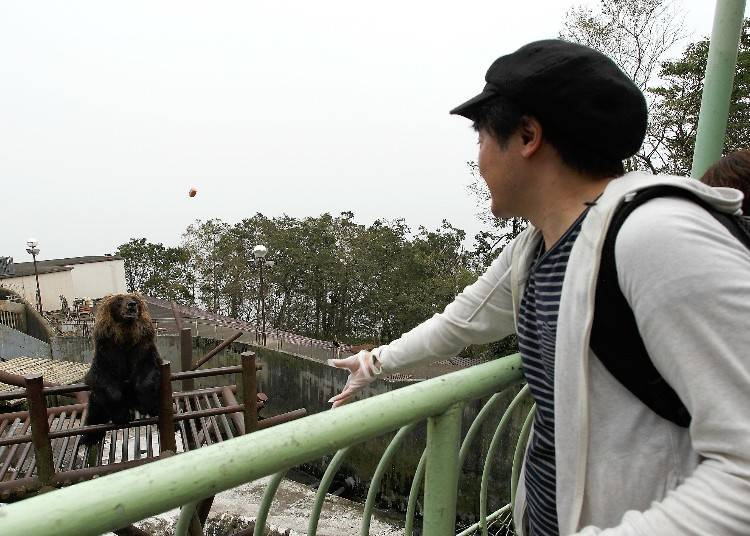 Noboribetsu Bear Park: Feeding Brown Bears!