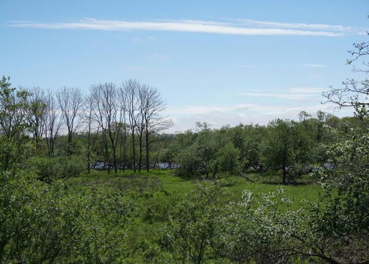4. Inside the Marsh