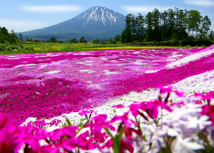 Spectacular Scenic Spots around Niseko and Yoteizan