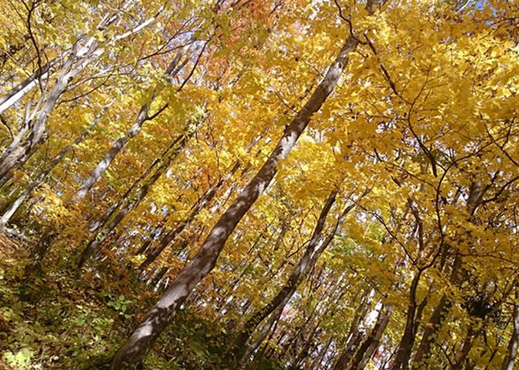 秋の紅葉もおすすめ!羊蹄山が育んだ「水の庭園」へ