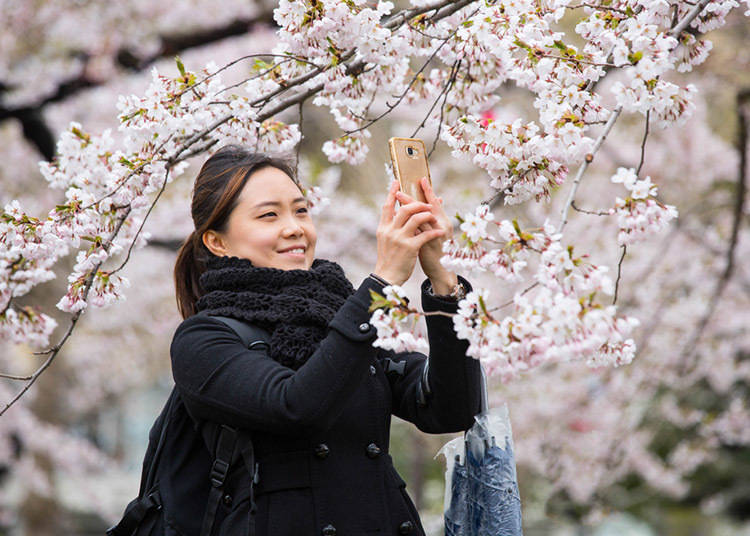 Spring in Hokkaido (March to May): In March the Temperature is still sometimes below Freezing. Cherry Blossoms Bloom in Tokyo in April but in Hokkaido They don't Come Out till May!