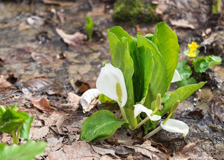 北海道春季(3~5月)的平均气温・降水量