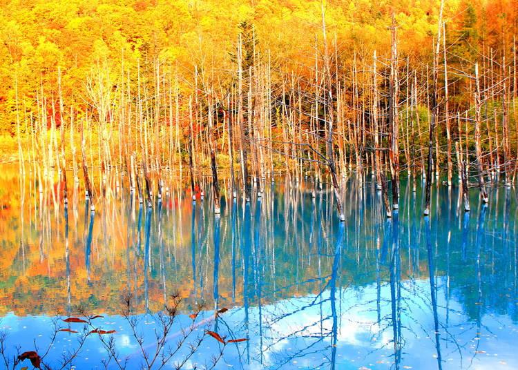 【北海道的秋季(9月、10月、11月)】 從秋天開始氣溫急速下降,早晚溫差大
