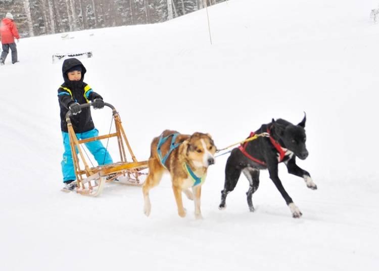 ■北海道ならではのダイナミックなスノーアクティビティが充実