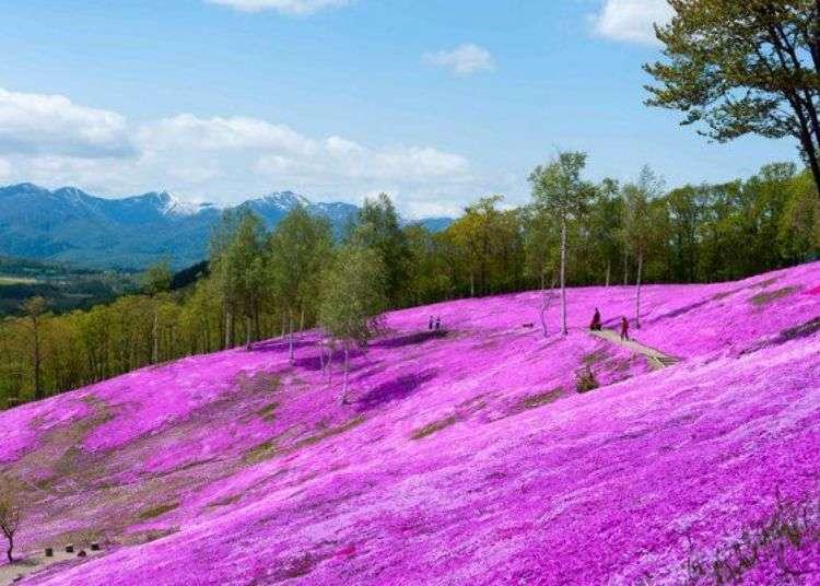 Scenic Japan Drives: Spring Along Hokkaido's Stunning 200km 'Flower Road'!