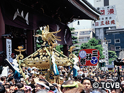 5月中旬  三社祭