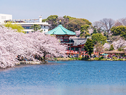 3月下旬~4月上旬 上野樱花祭