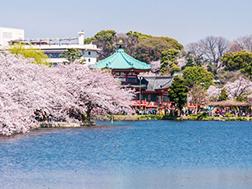 3月下旬~4月上旬 上野櫻花祭