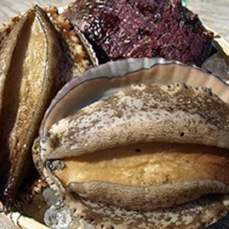 新鮮的鮑魚排、烤鮑魚本日08:00到貨