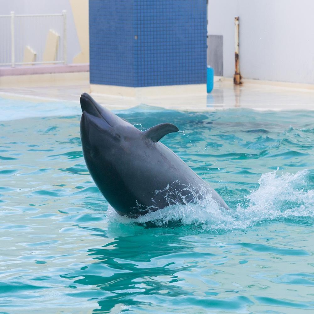 Zoo, Akuarium & Taman Botani