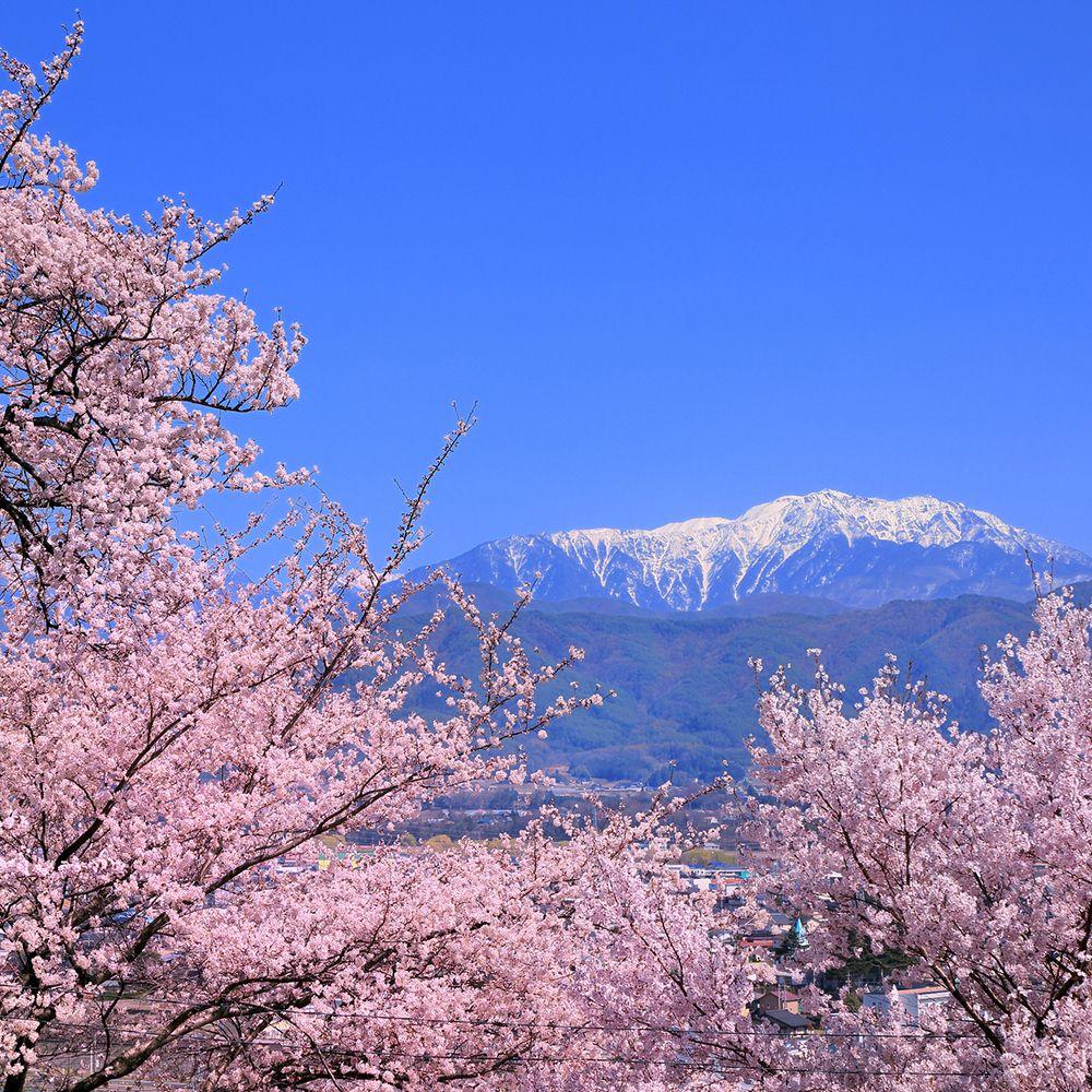 Bersiar-siar Musim Bunga