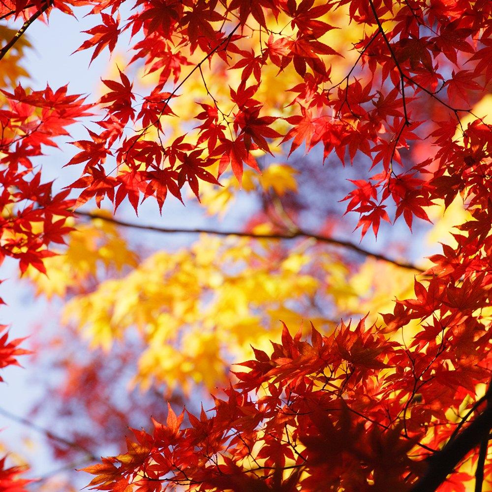 Autumn Sightseeing