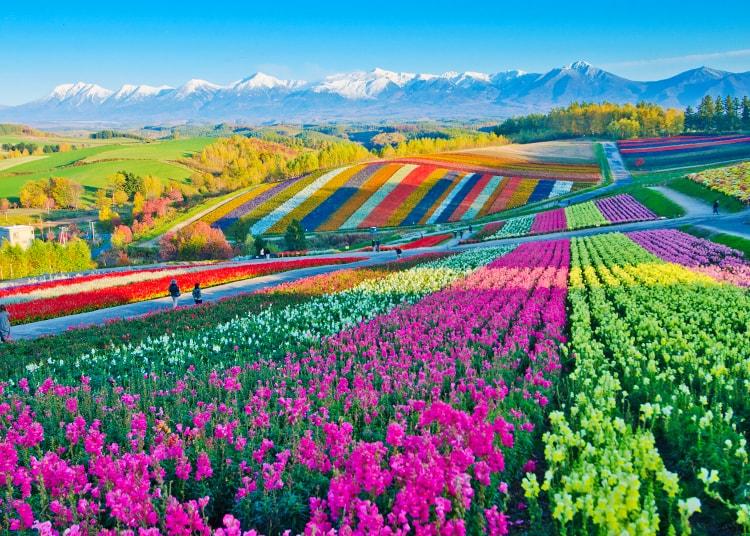 富良野・美瑛・層雲峡
