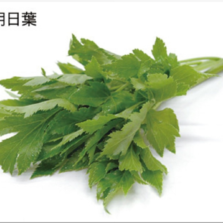 【Ashitaba】<br />