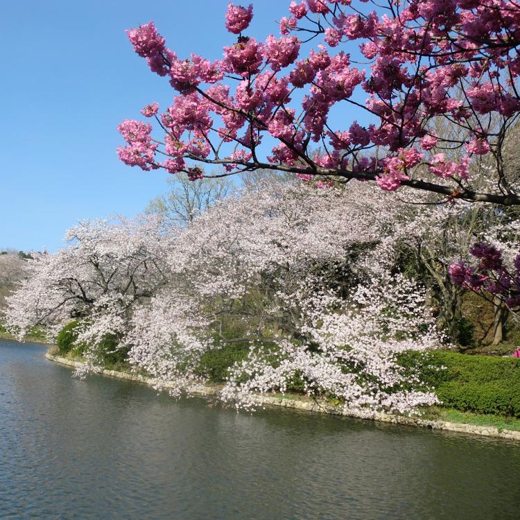 Mitsuike Park