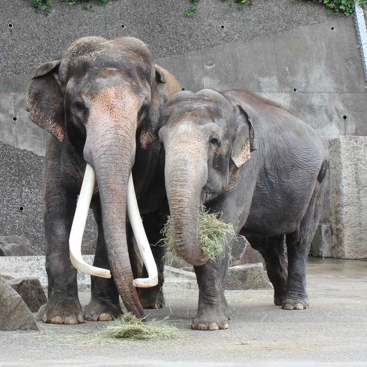 金泽动物园
