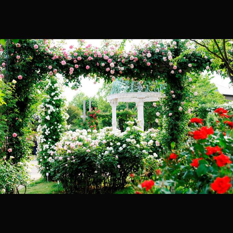 京成玫瑰園
