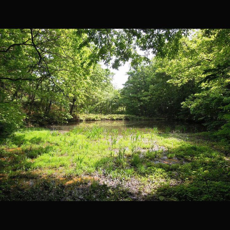 Bodaigi Pond