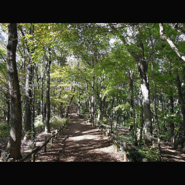 荒幡富士市民之森
