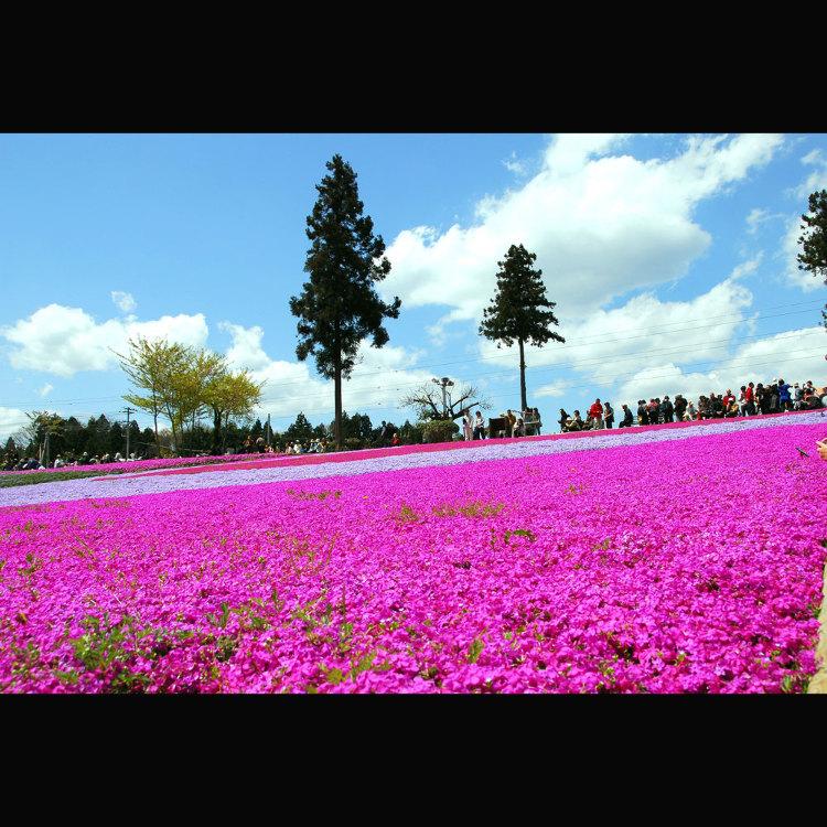 히쓰지야마 공원