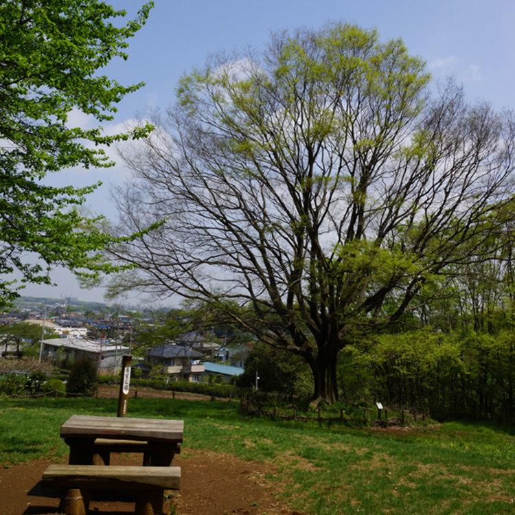 埼玉绿之森博物馆