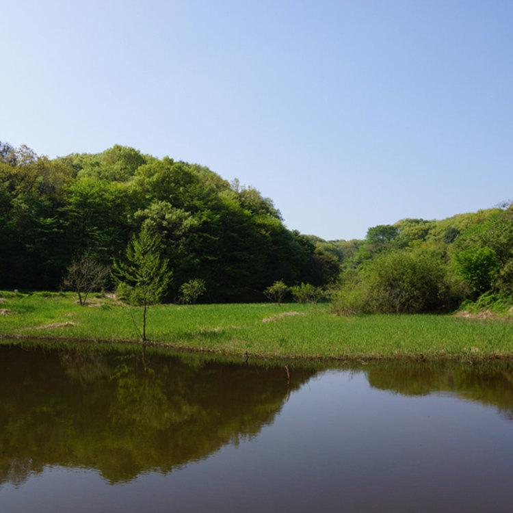 埼玉綠森林博物館