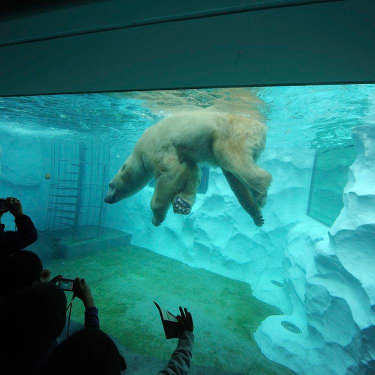 恩赐上野动物园