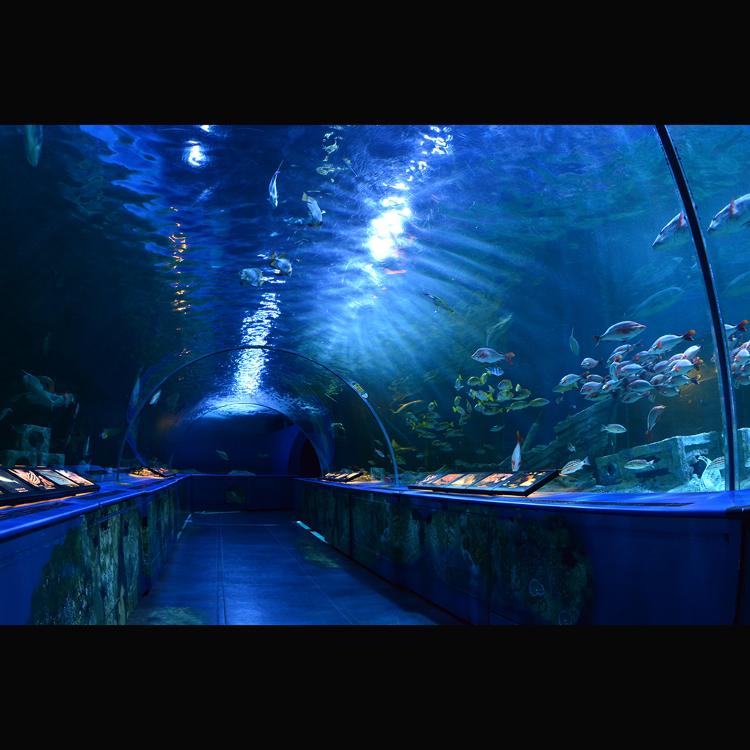 品川水族馆