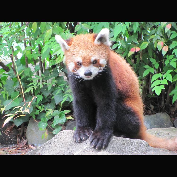江戶川區自然動物園