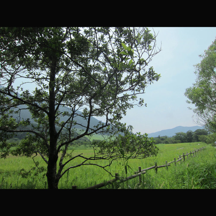 센고쿠하라 습원 식물 군락