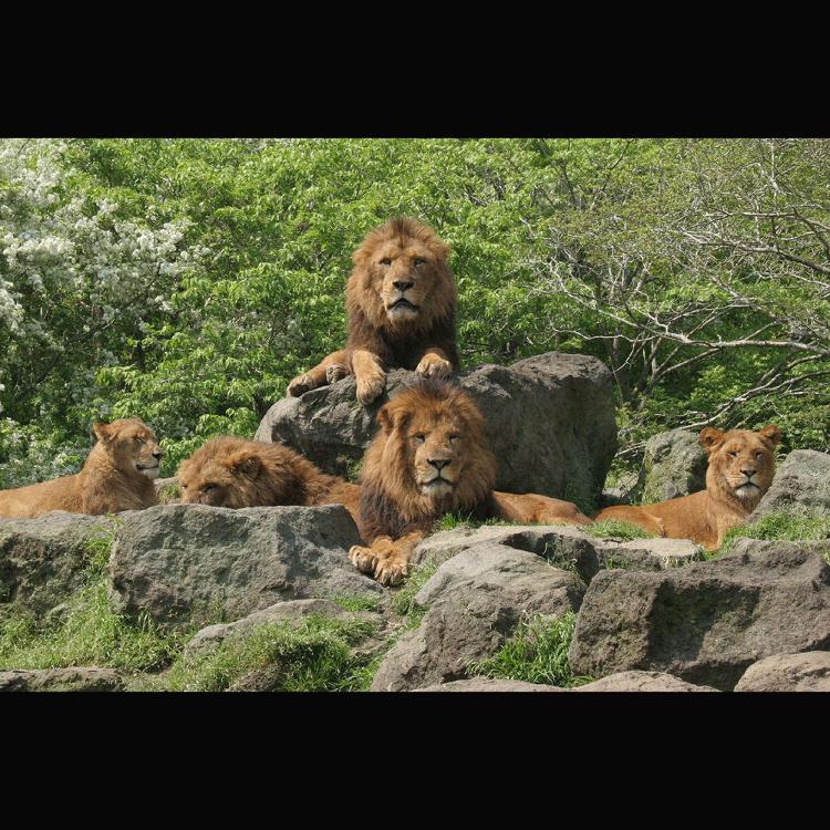 富士野生动物园