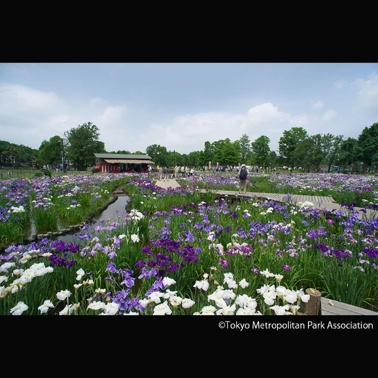 미즈모토 공원