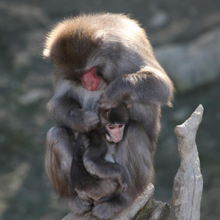 宝登山小动物公园