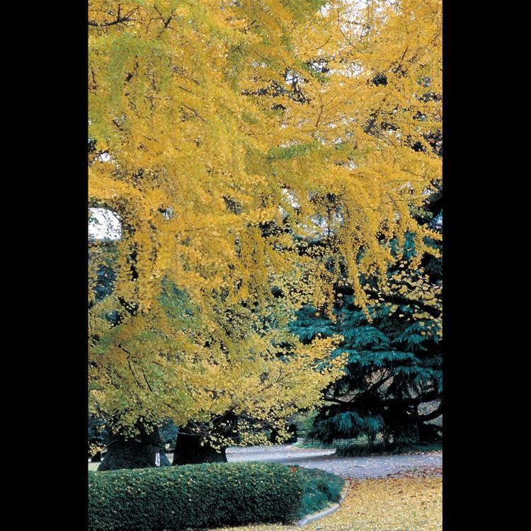 新宿御苑的秋天