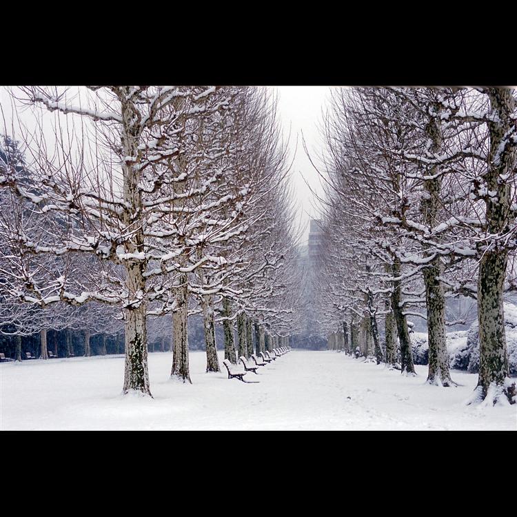 新宿御苑的冬天