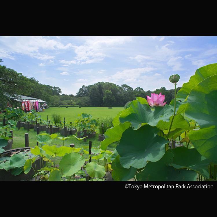 진다이 식물 공원